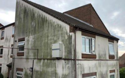 Drabbad av gröna alger på fasaden?
